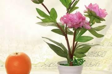 如何修剪芍药盆栽?