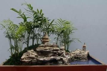 微型盆景怎样移栽上盆的方法 图片