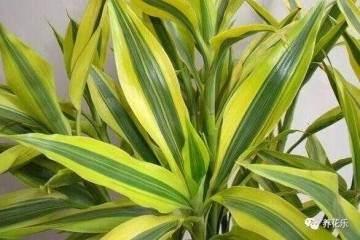 这五种植物盆栽非常耐旱 少浇水也能枝繁叶茂