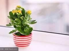 3月份气温回升 漳州市花卉销量开始提高