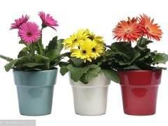 5月的漳州温度升高 致使盆花销量有所下降