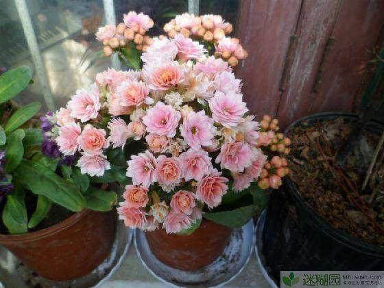 四川花卉种植面积达120万亩 年销售收入达120亿
