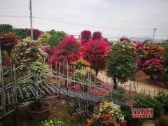 青州召开花卉产业集群发展工作会