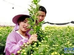 郑州市第六届海棠文化节在碧沙岗公园举办