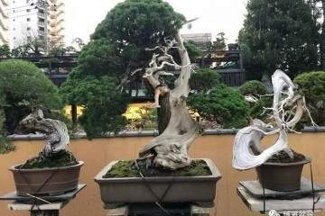 日本盆景之行--春花园盆栽美术馆