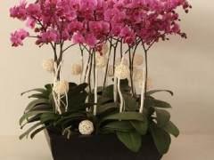 2月 北京市场迎来了真正的花卉销售旺季
