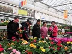 3月是盆花销售的传统旺季 由于气候适宜 需求旺盛