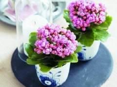 春节过后 北京花卉市场热度依旧未减