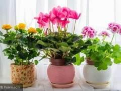 4月盆花销售与往年同期相比 整体行情较差