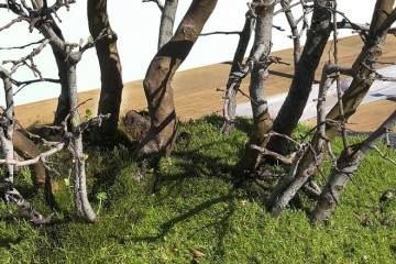 看老外 用16幅图 演示如何制作木瓜丛林盆景?