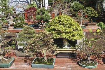 春天美在国际盆景植物园