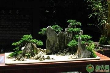 中国盆景的构图法与制作法