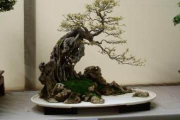 盆景制作与盆景构图指什么?