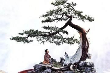 深圳盆景协会副秘书长:郭少波和他的盆景