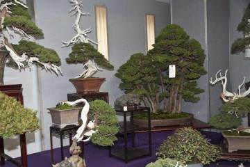 日本盆景:上野盆景绿色俱乐部销售区