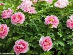 2月上中旬 上海花卉销售情况差于去年同期