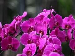9月上海各地盆花市场人气渐旺 销量上升