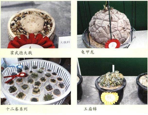 第五届中国国际仙人掌及多肉植物精品
