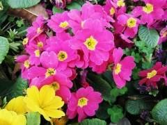 银川于9月2~8日举行了第七届中国花卉交易会