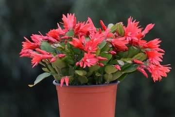 如何给花卉盆栽翻盆换土?