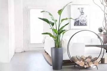 花卉移栽到盆钵中继续栽培 称为上盆