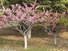 第三届中国 滁州华东苗木花卉交易博览会在