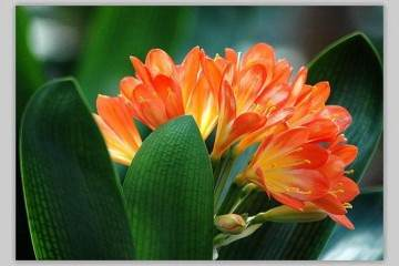 盆栽植物春天为什么要换盆换土?