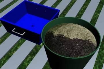 盆栽植物什么时候需要换盆?