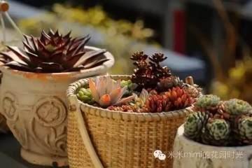 多肉植物的盆器搭配和换盆