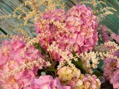 家庭养花的上盆、换盆与松盆