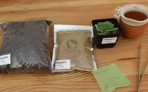 多肉植物的换盆方法详解(图解)2