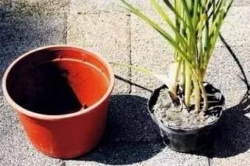 图解 给盆栽换盆时 要注意的7点
