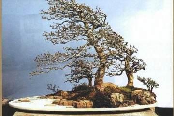 图解 树石盆景的换土全过程 7幅