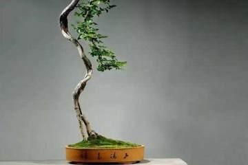 从唐代到明代的文人树盆景历史