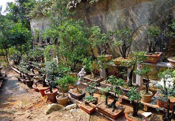 下山桩的培植土壤与移植