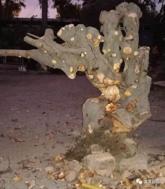 榕树下山桩的挖凿创作过程