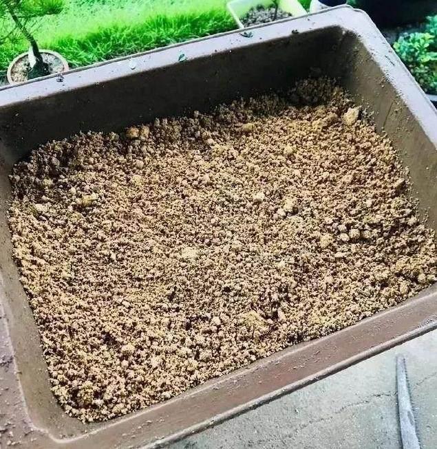 秋季 下山桩首次翻盆过程中的配土原则