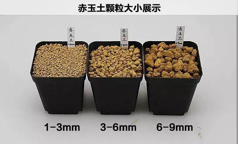 如何用混合基质的土壤来养下山桩?