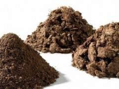 下山樁發根栽培的土壤配比經驗 圖片