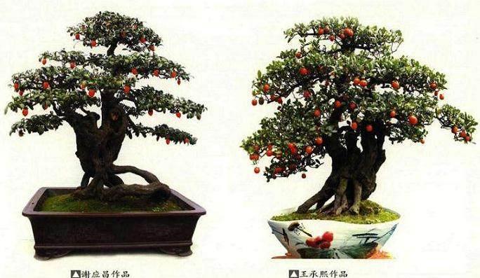 榆树下山桩怎样养桩 多久生根?