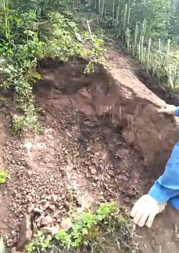男子山上挖大型金弹子下山桩 把山都挖塌了
