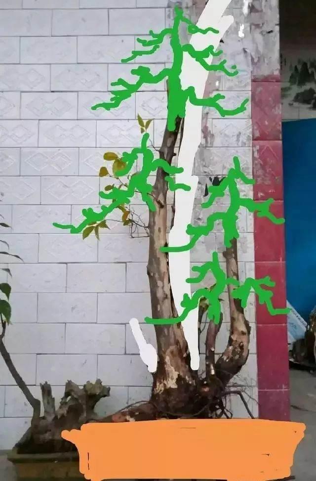 看看我的雀梅盆景下山桩 设计图