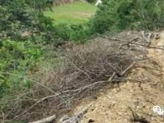 隆回挖黑松下山桩毁林案告破 案犯在网吧抓获