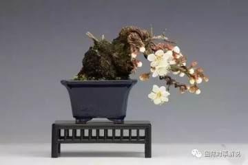 梅花盆景的3种造型样式