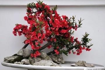 各種花卉盆景的養殖方法和生長條件