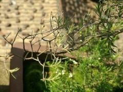 裸根下山桩要怎样种才能养活 2个发芽方法 图片