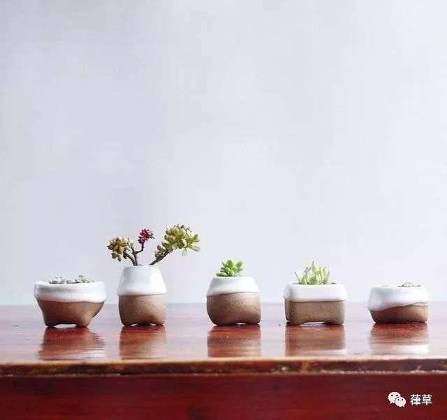 哪些家庭小盆栽比较好养?给你推荐几种