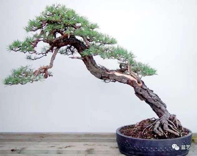 经验之谈   榆树下山桩种养的五个环节
