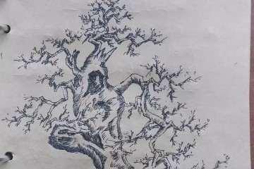 榆树盆景造型设计 舍利雕刻处理是重点