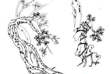 图解 金雀附石式盆景的制作 4幅